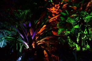 various palms at Buffalo Erie Botanical Gardens