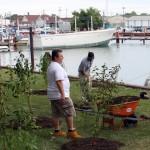 planting along water Buffalo Niagara