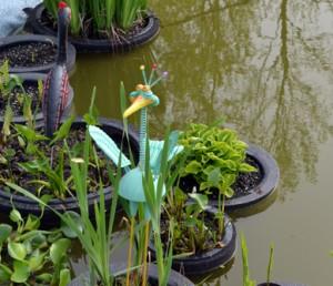pond in Lancaster NY