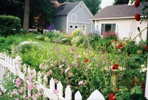 garden along fence from Kerry Ann Mendez