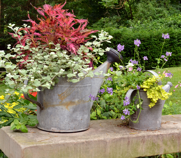 watering can planters in Lewiston