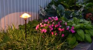 close-up in nighttime garden in Buffalo NY area