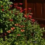 garden closeup in Amherst NY