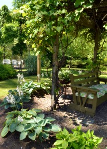 grape arbor garden at Riley property in Albion, NY