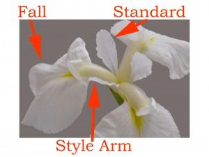 Parts of iris