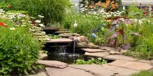 pond in Cheektowaga NY