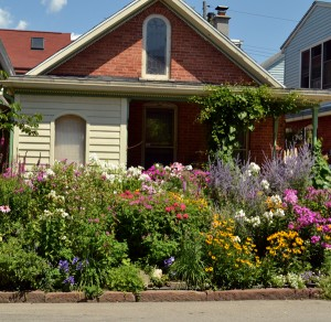 front garden on Summer Street Buffalo NY