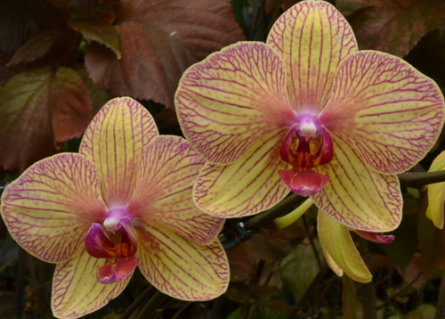 orchid at Buffalo and Erie County Botanical Gardens