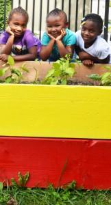 raised bed in teaching garden in Buffalo