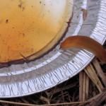 slug photo from Kathryn Olmstead
