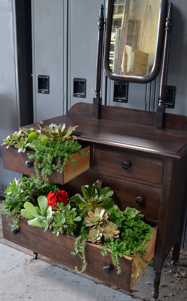 dresser with succulents in Buffalo NY