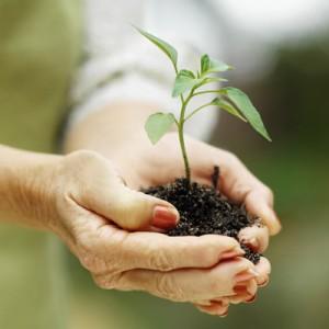 Master gardener program 2011