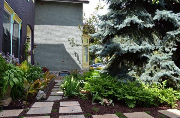 grassless front yard in Buffalo NY