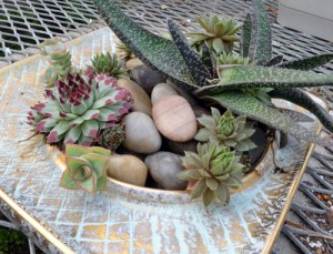 succulents in ashtray in Buffalo NY