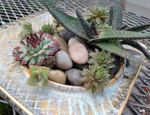 succulents in ashtray in Buffalo NY