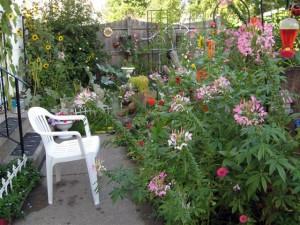 autumn garden in Amherst NY