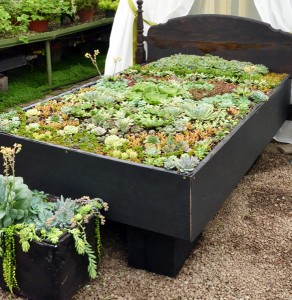bed from succulent show in Buffalo NY