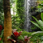 waterfall at Botanical Gardens in Buffalo NY