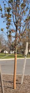 wrapped tree at Buffalo Botanical Gardens