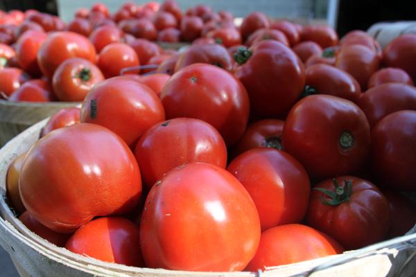 tomatoes by Eckhardt in Buffalo NY area