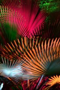 palm fans in Buffalo NY