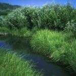 riparian habitat Buffalo NY