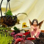 closeup in fairy garden in Buffalo NY area