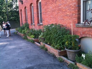 Evergreen Health Services vegetable garden in Buffalo NY