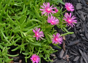 ice plant in Buffalo NY