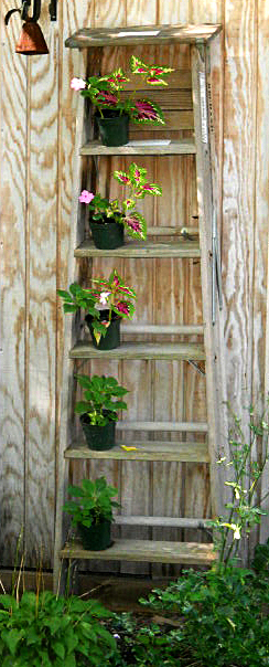 old ladder holds garden plants in Buffalo NY