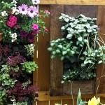vertical gardens in Buffalo NY area