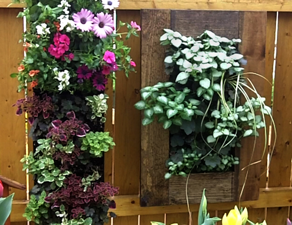 vertical gardens in Buffalo NY area