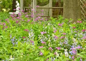 spring flowers in garden in Hamburg NY