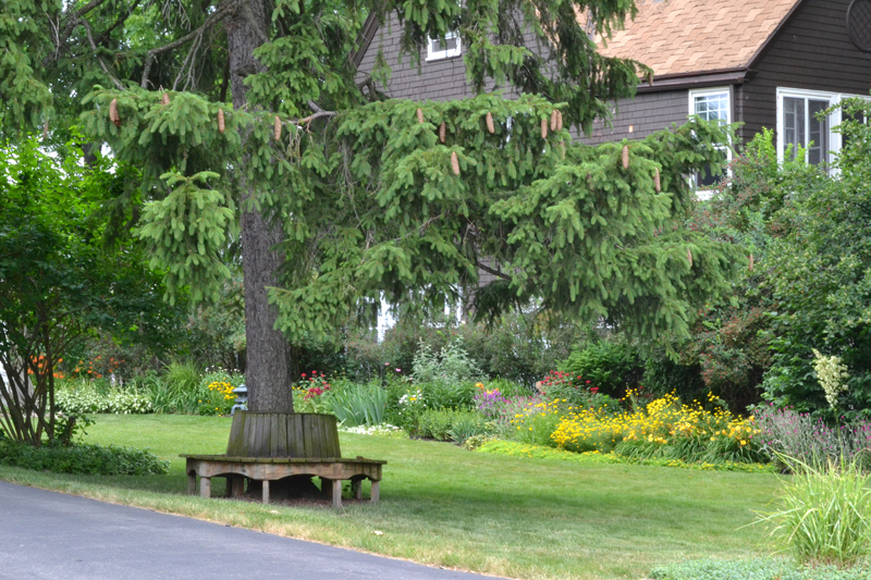bench around evergreen tree and border garden in Buffalo
