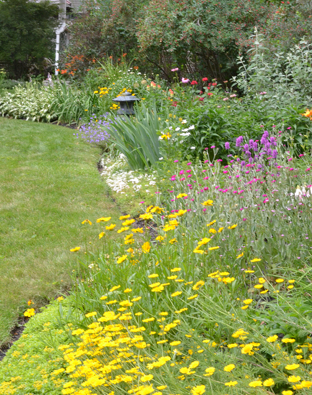perennial  border garden in Parkside area of Buffalo NY