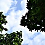 trees in Amherst NY