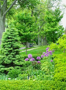trees in spring in Western New York Donna Brok