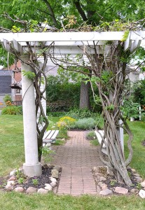 wisteria arbor in Parkside area of Buffalo NY