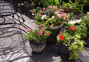container gardens in Williamsville NY