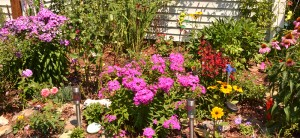 cottage garden in West Seneca NY