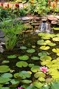 first pond with waterfall in garden in Tonawanda NY