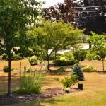formal beds in front yard in West Seneca NY