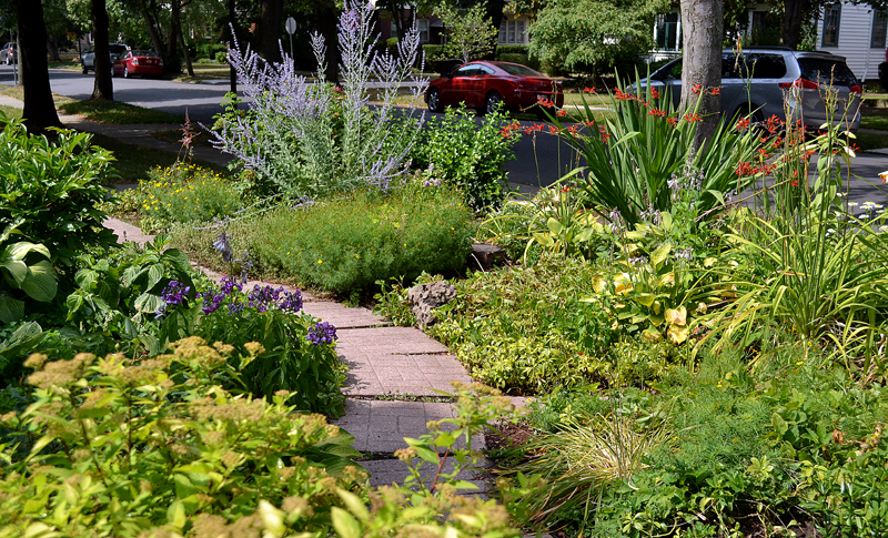 path through grassless front yard in Buffalo NY
