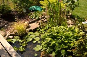 pond in organic yard in Lancaster NY