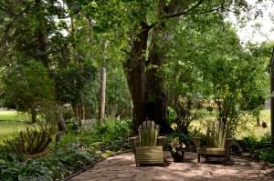 shade garden behind garage in Williamsville NY