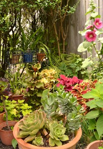 succulents and coleus on Garden Walk Buffalo