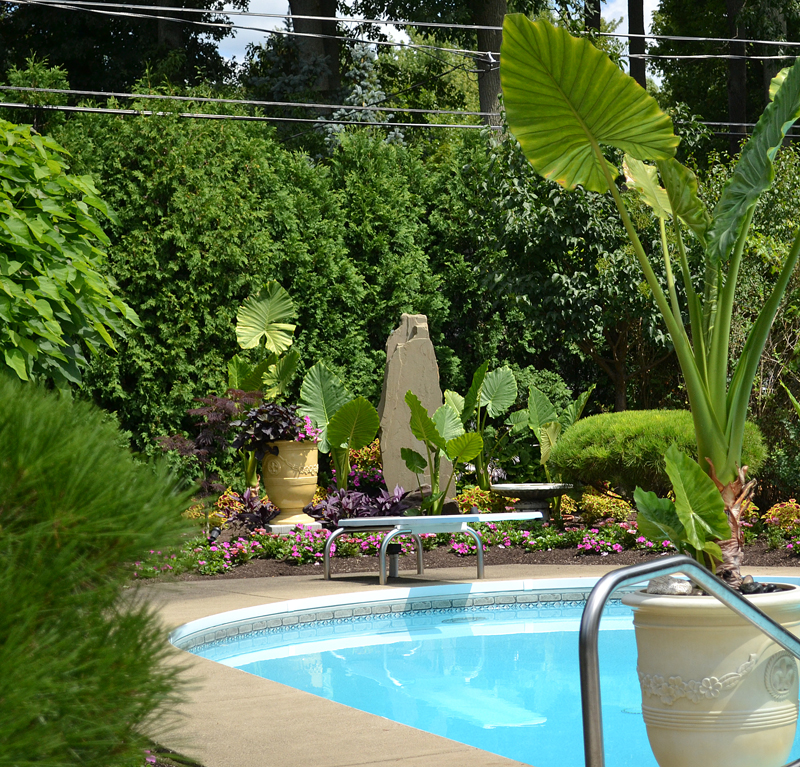 tropical landscaping around pool in Amherst NY