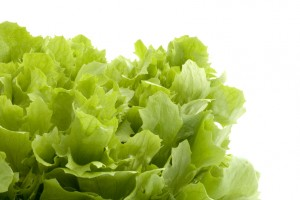 Lettuce leaves with white space from Fotalia