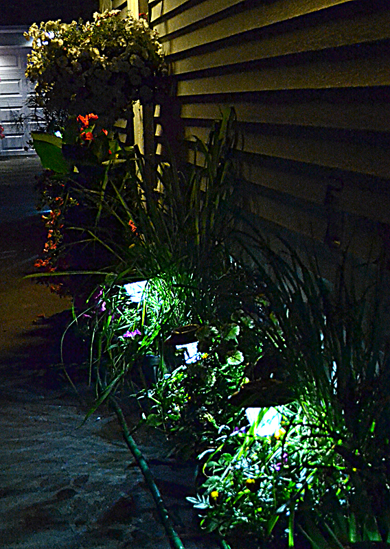 Get A Nighttime View Of Garden That Packs Many Flowers In