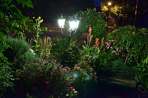 lush garden in front yard in Tonawanda NY at night